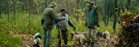 The Truffle Hunters - Joy and dedication in the dirt of Northern Italy