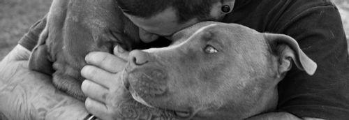 Dog's Best Friend - Good boys, great doco