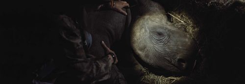 The Last Horns of Africa - The danger, the heartache and the importance of saving the Rhinos