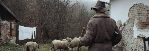 The Shepherd - A true story through an unflinching lens